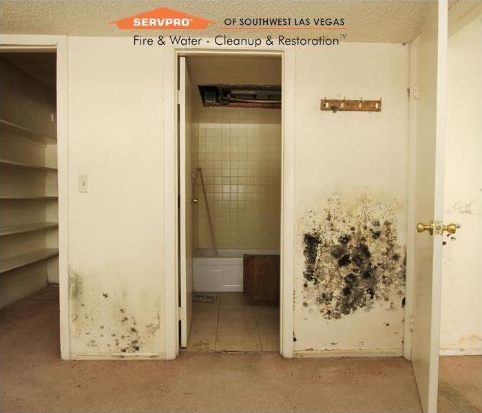 Mold Remediation Mold remediation, Las Vegas